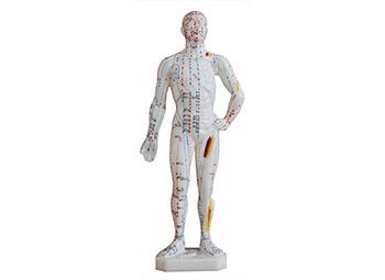 针灸人体模型26CM