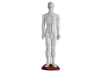 针灸穴位模型(60CM男性)