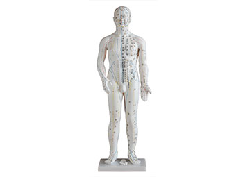 针灸穴位人体模型(70CM男性)