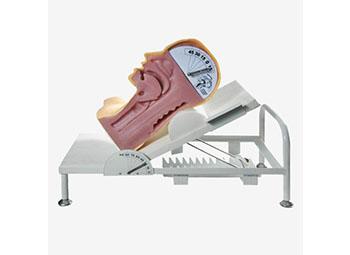 高级吞咽机制模型,吞咽与呼吸机制演示模型