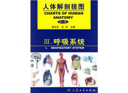 呼吸系统挂图(12张)