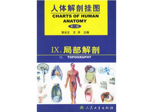 局部解剖挂图(67张)