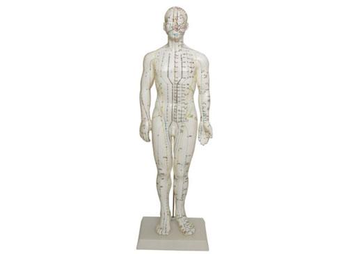 人体穴位模型(50CM男性)