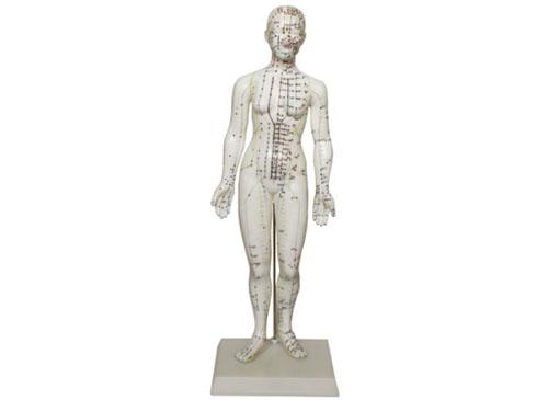 穴位人体模型(48CM女性)