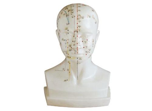 头针灸模型