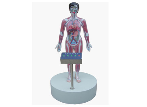 微电脑吸毒血液演示模型