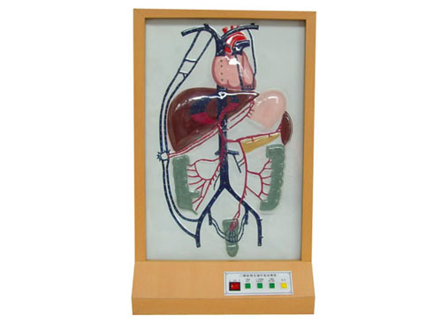 门静脉侧支循环电动模型