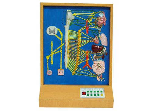 自主神经电动模型