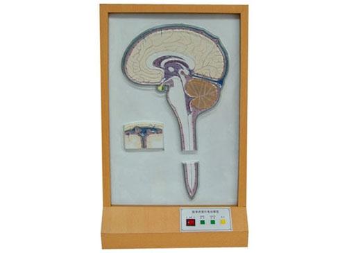 脑脊液循环电动模型