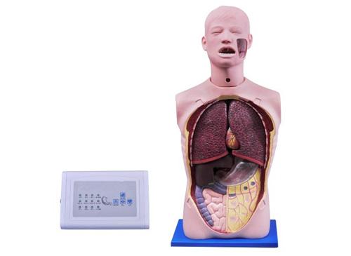 洗胃模型,多功能透明洗胃模型