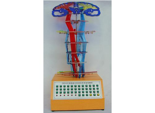 微电脑中枢神经传导直观模型
